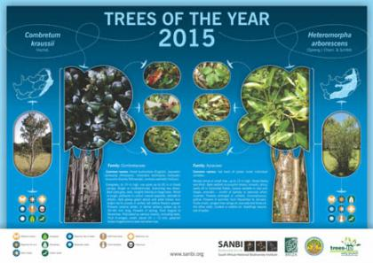 Trees of the Year 2015