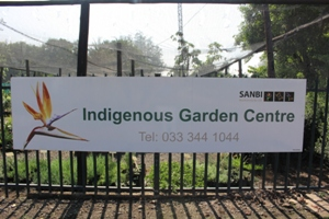 Indigenous nursery