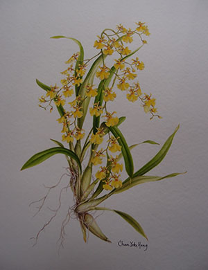 Oncidium, Jade Chan Yoke Heng - WOC Botanical Art Competition 2014