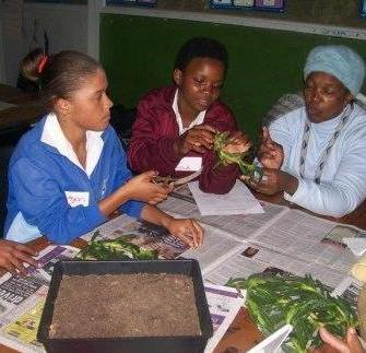 'Green teams' of participating schools at a Plant Propagation workshop.