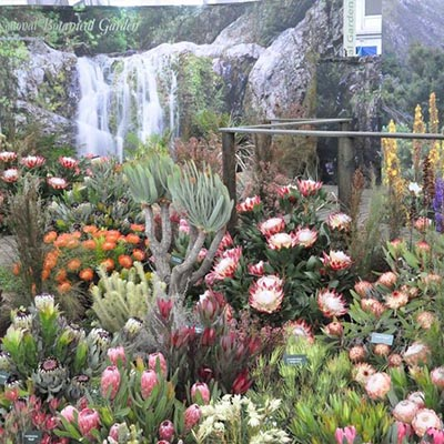 South Africa Wins 34th Gold Medal At The Chelsea Flower